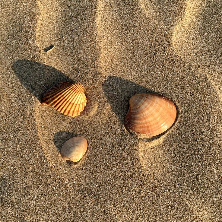 Shells, Laredo beach, Spain - lilmissboho.com