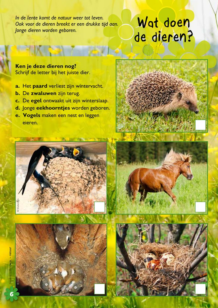 Wat doen dieren in de lente? @keireeen
