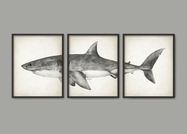Great White Shark Watercolor Art Poster Set Of 3 - Shark Art Print - Great White Shark Poster - Bathroom Wall Art - Marine Biology (AB560) by QuantumPrints on Etsy https://www.etsy.com/listing/273033892/great-white-shark-watercolor-art-poster