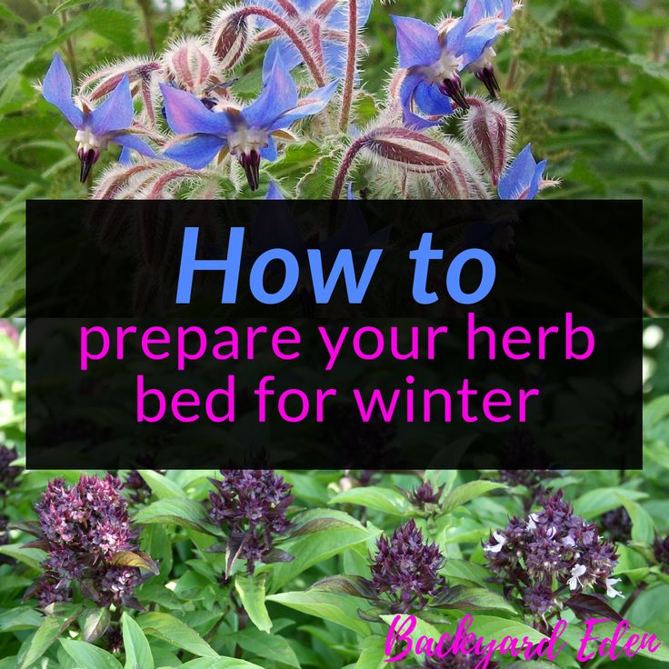 How To Prepare Your Herb Bed For Winter Herbs And Gardens