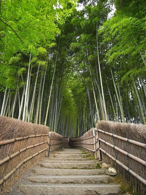 The Bamboo Forest Trail near Kyoto, Japan