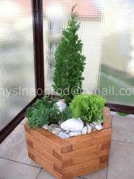 Znalezione obrazy dla zapytania odmiany sosny na taras do donicy