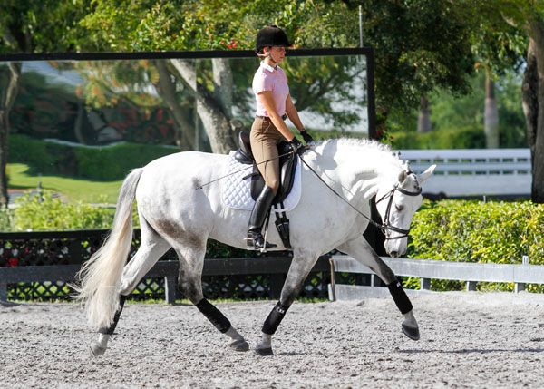 544 best photo 39 s horse dressage images on pinterest for Dujardin 817