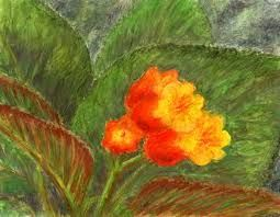 Priumula... in Java, watercolor and pastel by Jana Haasová