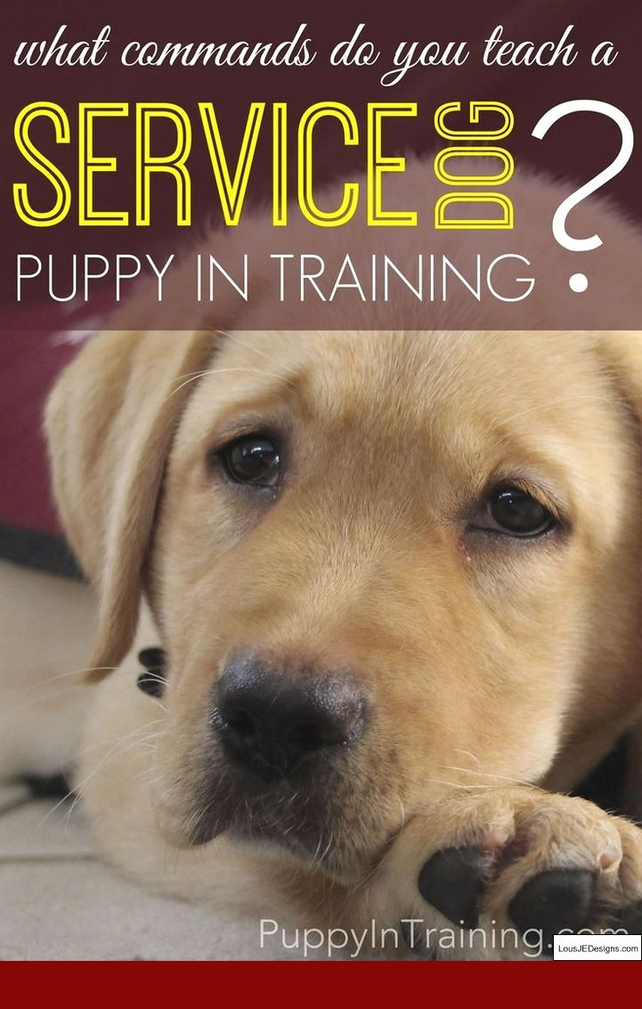 Best Ways To Train A Deaf Dog And Pics Of How To Train A Dog To