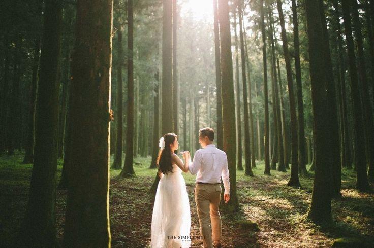 Wedding photo in Forest, Jeju Island