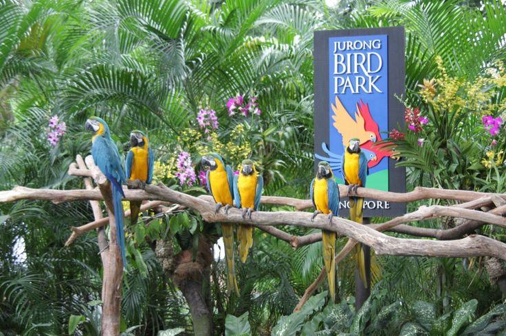 Jurong bird park http://www.bestprice.vn/tour/