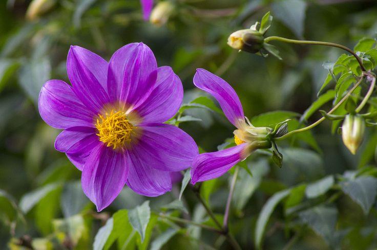 Pretty Purple Flower - Rule of Thirds - David's Class