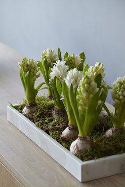 Helleborus og svibler er delikate juleblomster. Du får kjøpt marmor potter og fat hos oss.