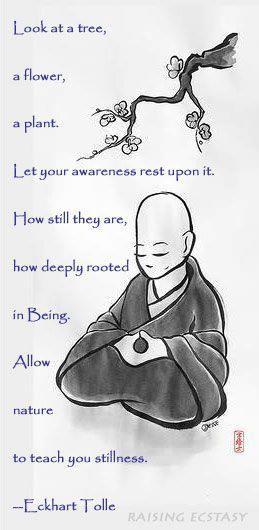 . Look at a tree, a flower, a plant. Let your awareness rest upon it. How still they are, how deeply rooted in Being. Allow nature to teach you stillness. -Eckhart Tolle