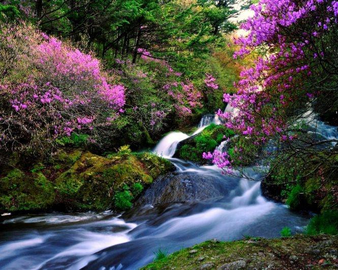Colorful stream | Serene Scenery | Pinterest
