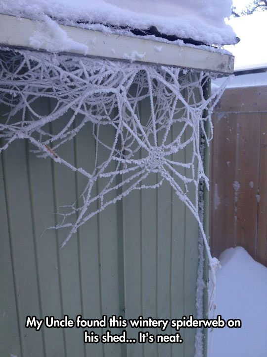 Wintery spiderweb… The only reason this is 'neat' is because it means the spider is FROZEN TO DEATH! Bwahahahahahaha!!!