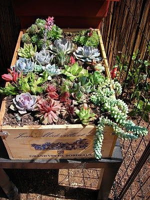 succulents in Costco's wine wooden boxes