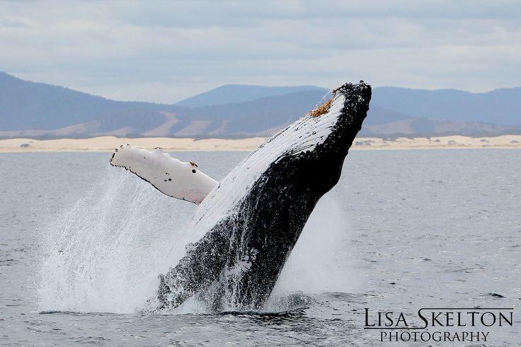 Love the Port Stephens wildlife!