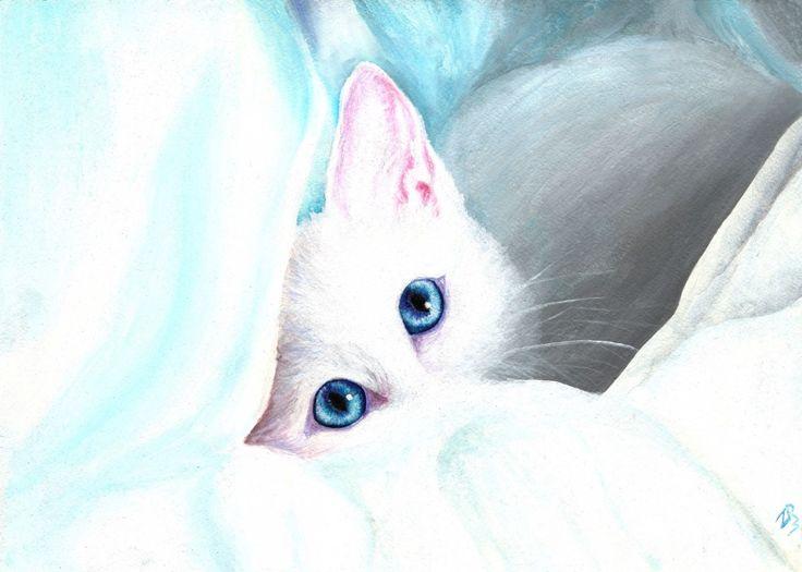 Картинки милого котенка с голубыми глазами, меня
