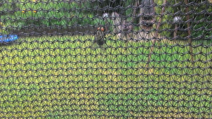 Moucha volant na trampolíně