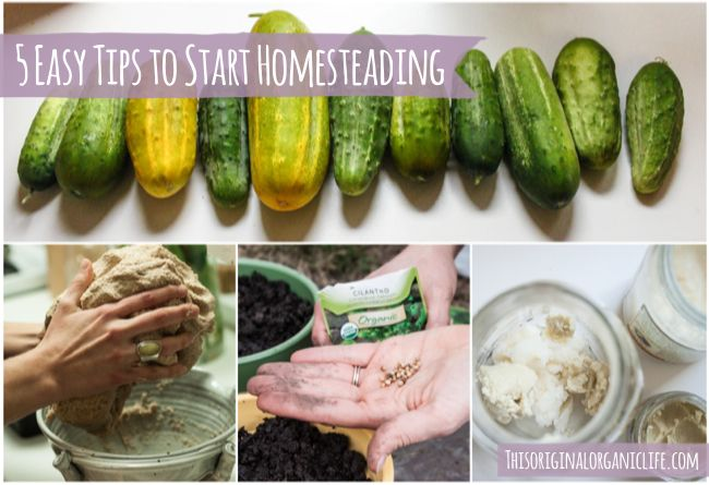 What is Homesteading? + 5 Easy Tips to Start Homesteading via Original Organics  #homesteading #homestead #diy #grow #food #garden #farm #organic #natural #home #tips