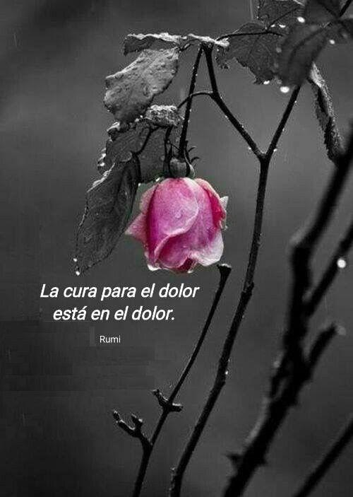 Esta frase de Rumi, es una invitación a pensar al dolor como fuente de información. Es decir, indagar en el dolor para descubrir que juicios o hechos lo promueven, que situaciones lo sostienen, qu...