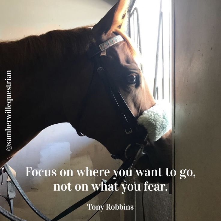 Our gorgeous Thoroughbred Sandy. Horse Quotes Horse Memes Racehorse