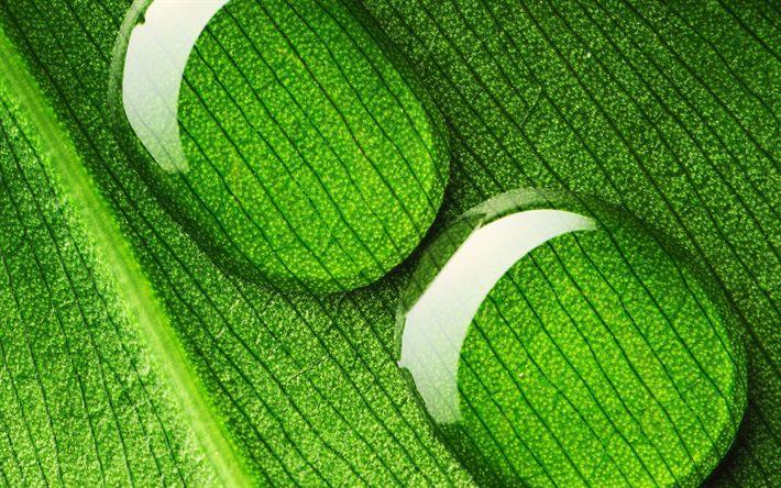 Descargar fondos de pantalla Gotas de agua, las de hoja verde, los conceptos de la ecología, el verde de las hojas, el agua, los problemas de agua