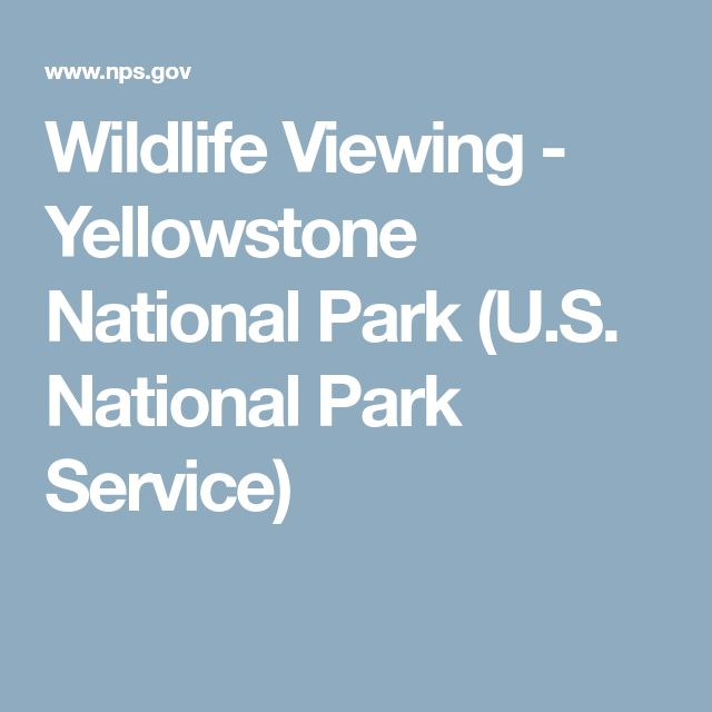 Wildlife Viewing - Yellowstone National Park (U.S. National Park Service)