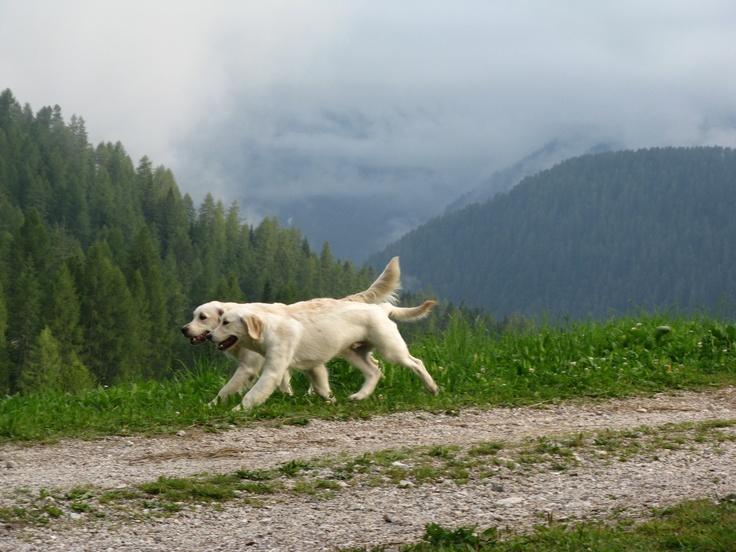 Maggie e Cookie: a passeggio in montagna