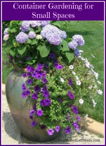 Container Gardening in Small Spaces - Tips for planning your container garden including things to consider when choosing plants and how to arrange the plants.