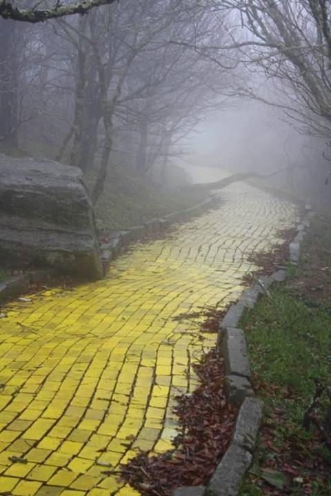 """The yellow brick road from the abandoned theme park """"The Land of Oz"""" in Beech Mountain, North Carolina"""