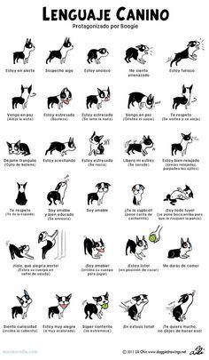 La posición de las orejas de un perrito dice mucho más de lo que crees: | 17 Datos gráficos que todo amante de los perros debe conocer