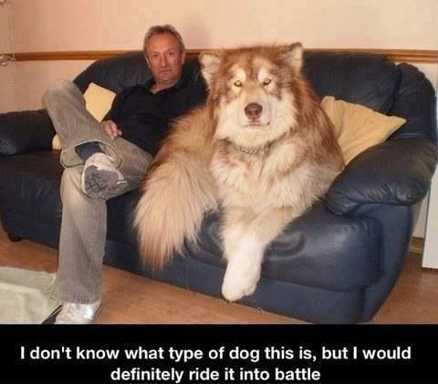 I don't know what type of dog this is but I would definitely ride it into battle