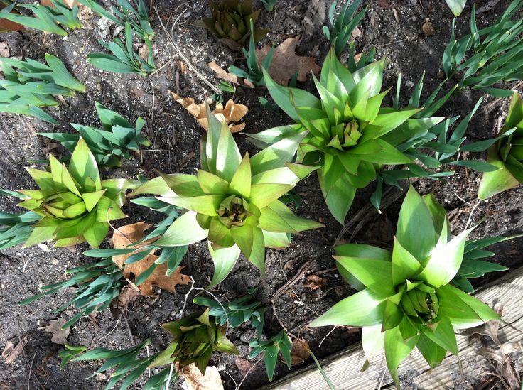 Strange Indiana Flower spring