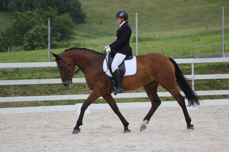 STAJNIA RYBNICA #horse #horseriding #Poland