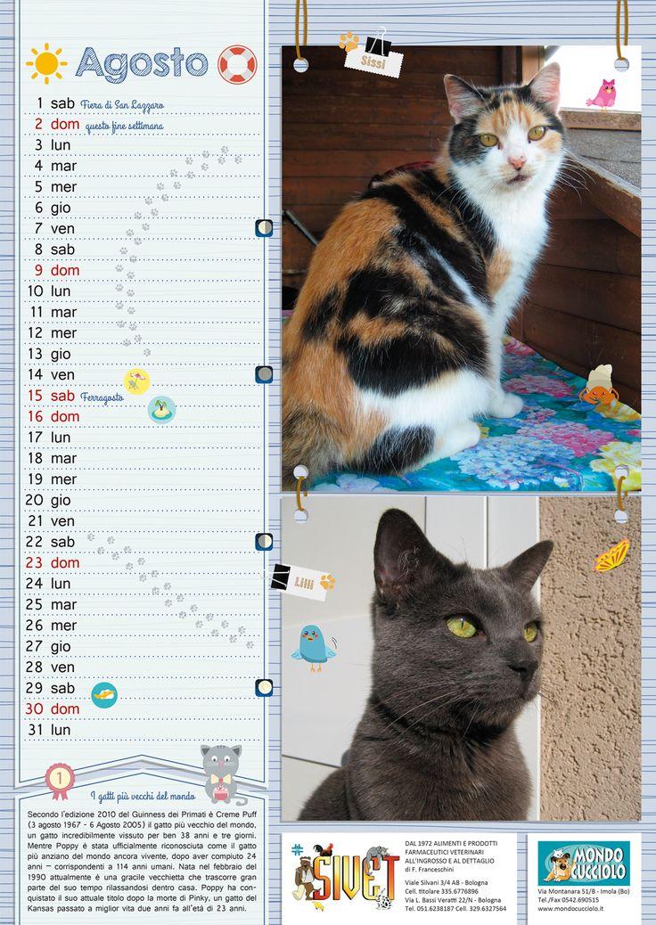#calendar #august #cats #calendario #agosto #gatti