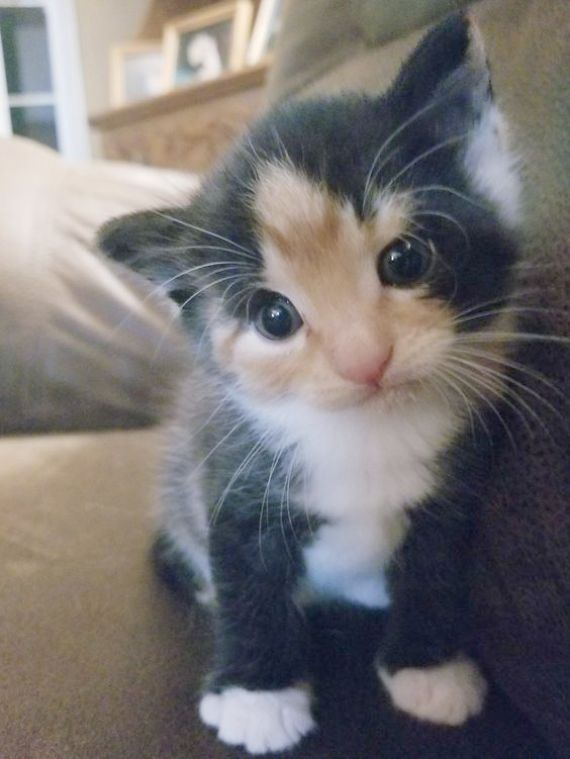Bengal Kittens For Adoption Near Me Toward Cute Animals Hugging On Kittens For Sale Near Huddersfield How To Draw Cute Animals Coloring Pages Cute Cats Fluffy Kittens Beautiful Cats