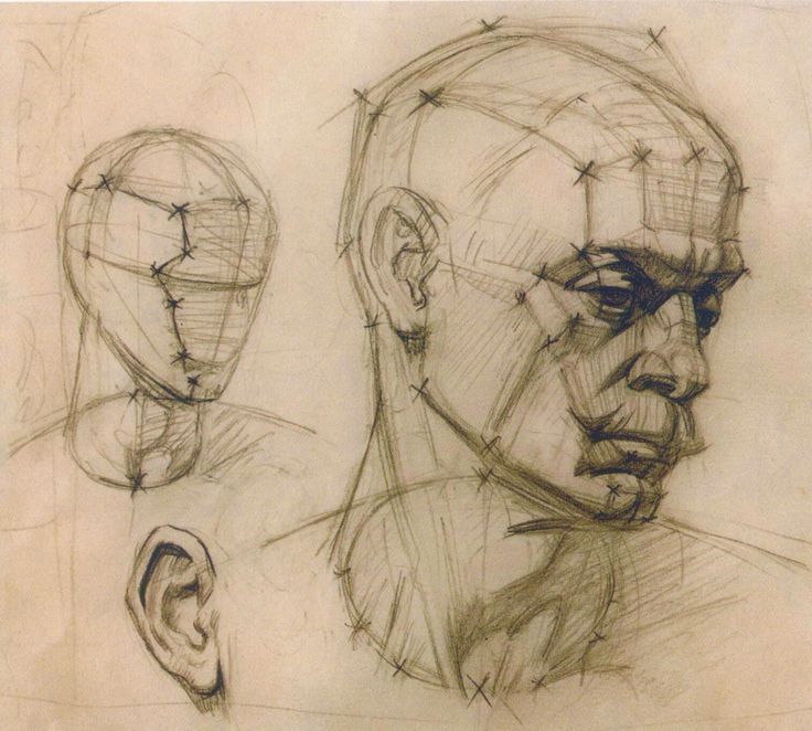 академический рисунок. конструктивная зарисовка головы человека. графика.
