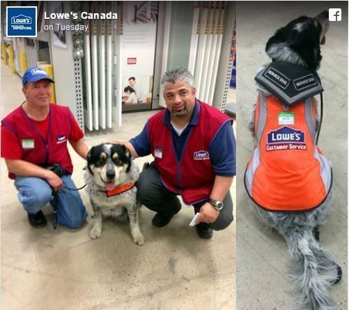 There is a brand new Lowes Home Improvement store in Regina, which is located in Saskatchewan in Canada, and they needed some new employees to come help ou #lowe'shomeimprovementlocations, #homeimprovementstores,