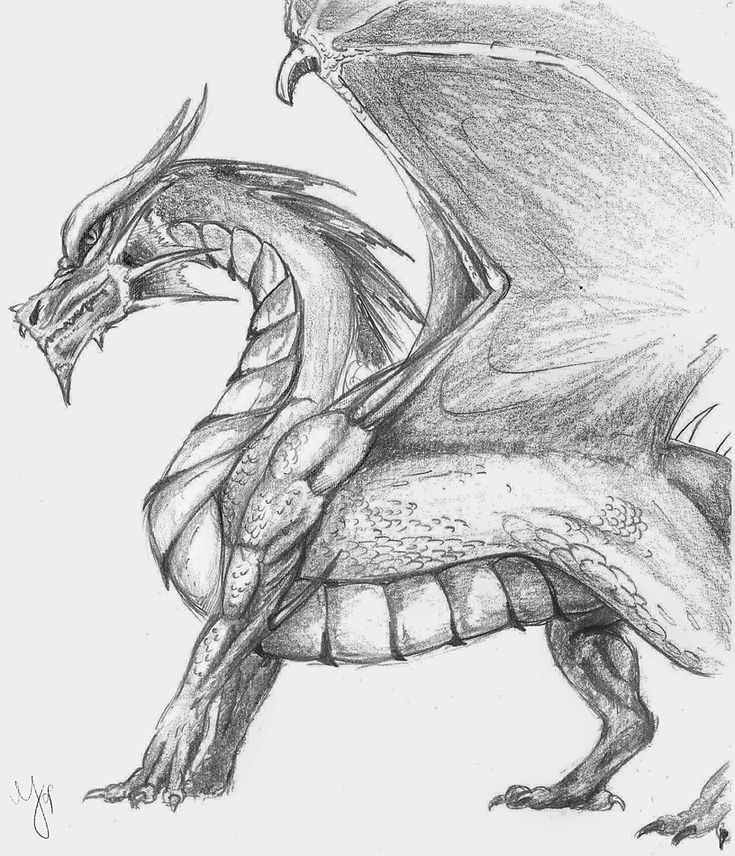 easy drawings of dragons