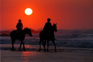 Romantic horse rides along the coast,for you and your loved one.