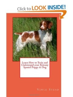 Learn How to Train and Understand your Brittany Spaniel Puppy