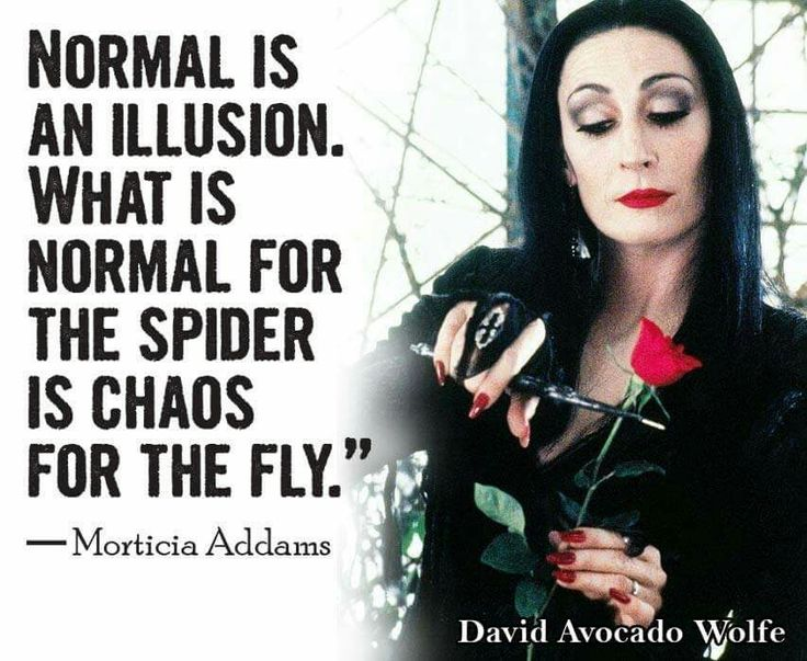 Normal is an illusion. | memes | Pinterest | To be, Funny ...