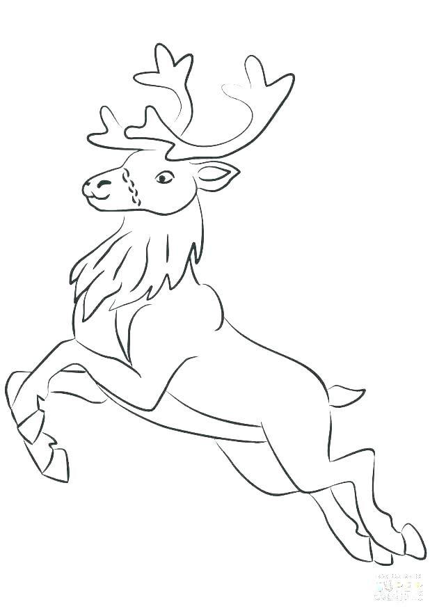 Baby Deer Coloring Sheets Deer Coloring Page Elk Coloring Page Elk