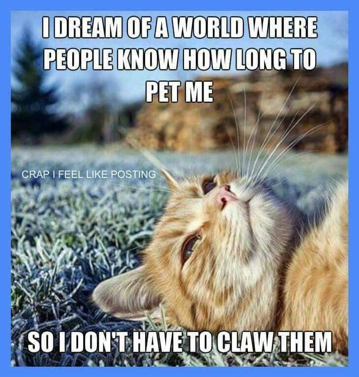 Best Cat Memes Images On Pinterest Cats Pictures And Black - 12 heartbreaking first world cat problems