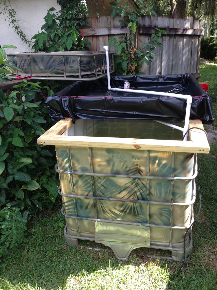 Our backyard aquaponic garden aquaponics pinterest for Fish used in aquaponics