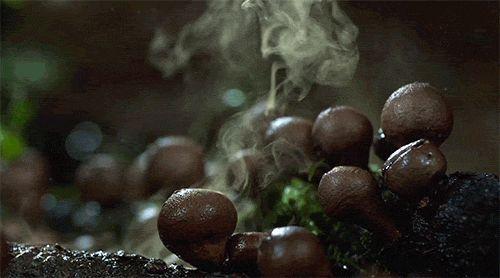 The wonderful world of fungi revealed by Martin Pfister