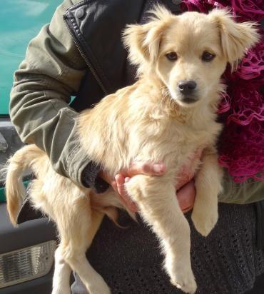 Hund Welpe, Mischling X (Mischling, Rüde, 4 Monate