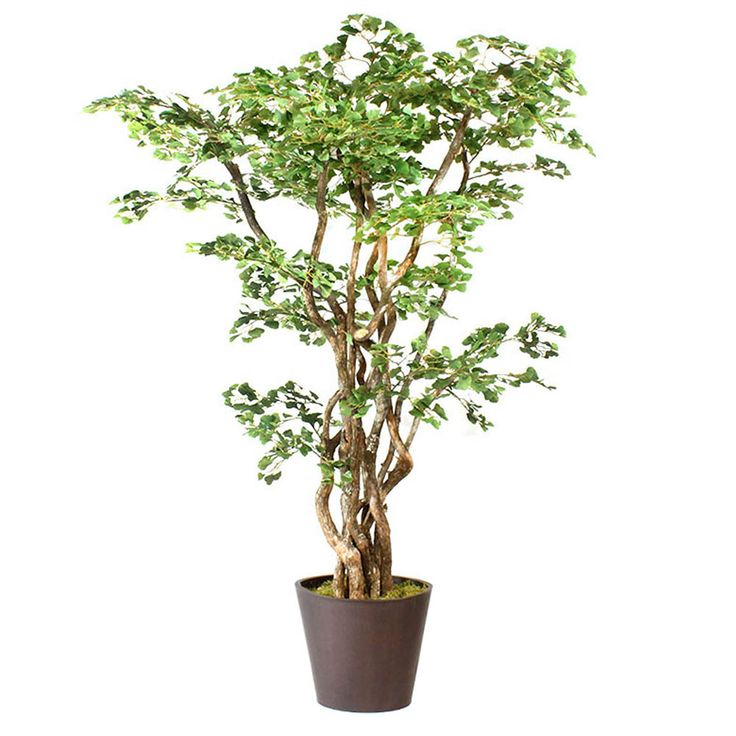 Shop for 8 foot Artificial Ginkgo Tree Metal Planter at Artificial Plants and Trees