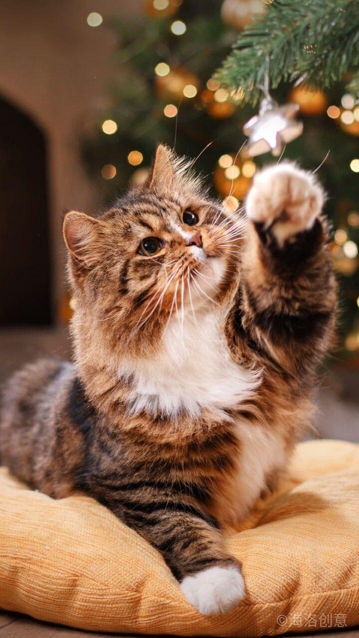 Pin Oleh Kejt Di Zhivotnyj Mir Binatang Anak Kucing Menggemaskan Hewan