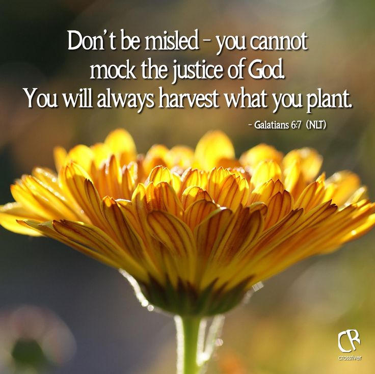 Don't be misled - you cannot mock the justice of God. You will always harvest what you plant. - Gal. 6:7 #NLT #BIble