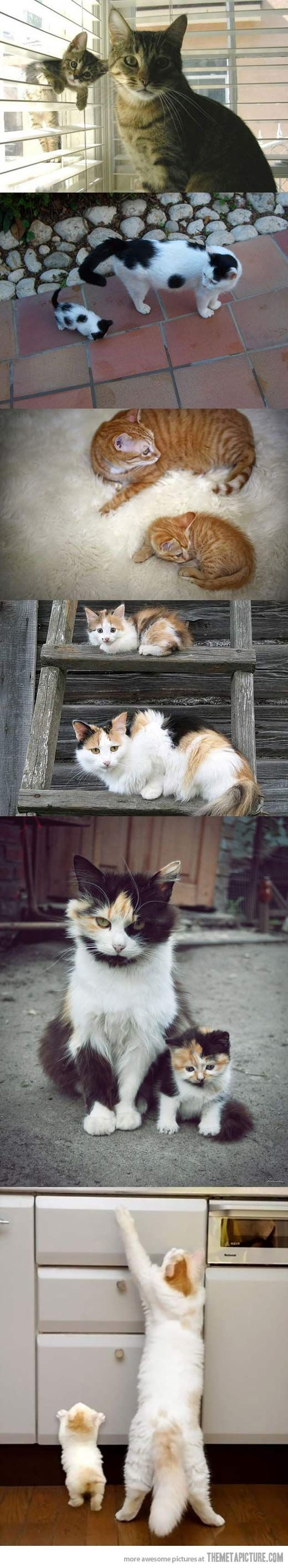 Kittens with look-alike parents - [someone else's caption]