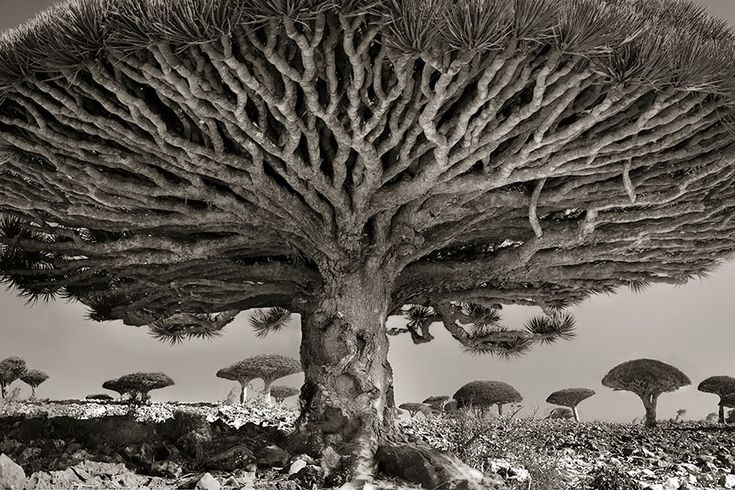 Beth Moon  - Woman Spends 14 Years Photographing World's Oldest Trees [http://www.bethmoon.com]
